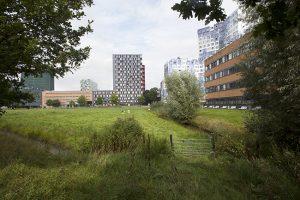 'De roeibaan is fantastisch in te passen op de huidige weilanden achter de Toulouselaan'